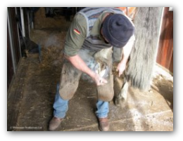 The Farrier visits Limebrook every week