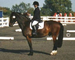 Rider completing a dressage test